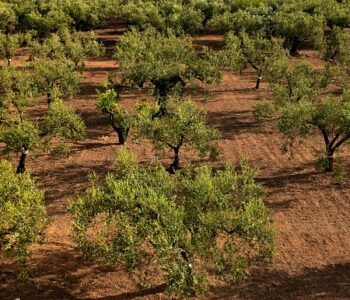 CAMPAG innovará en compostaje y agricultura de precisión en almendro y olivar de secano